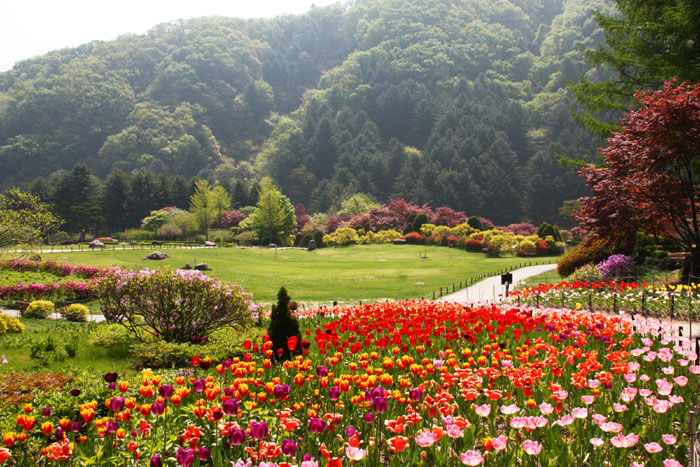 Enjoy The Seasons With Flower Koreatourinformation Com