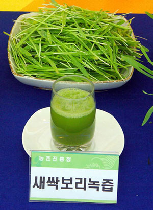 Green vegetable juice made from barley sprouts. (photo courtesy of RDA)